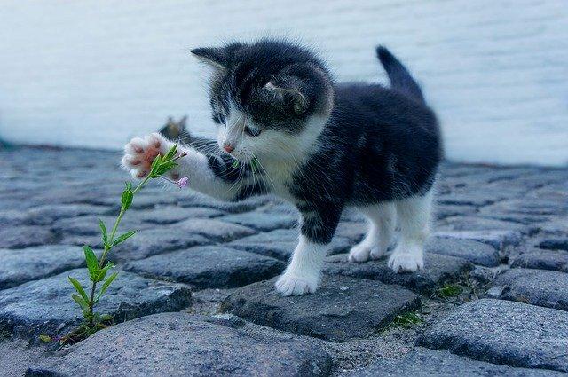 猫ひっかき病が多発する時期