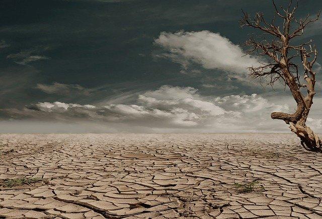 地球温暖化に歯止めをかけるのは昆虫食だ!