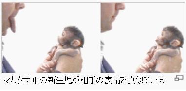 人間の赤ちゃんだけでなく、サルの赤ちゃんでもみられる