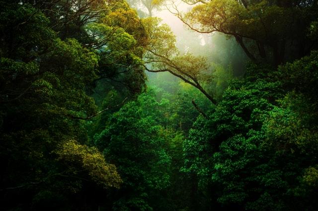 森林浴のスゴ過ぎる健康効果